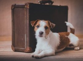 A GUIDE TO MOVING HOUSE WITH PETS